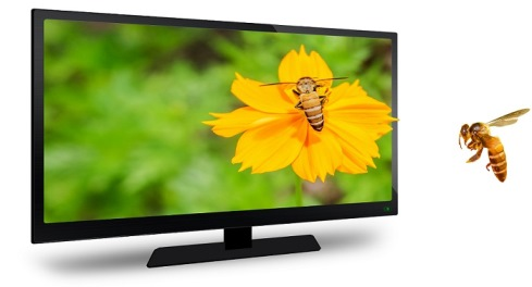 Television offers with Latest Features